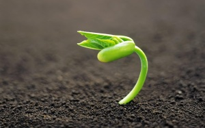 plant_new_life