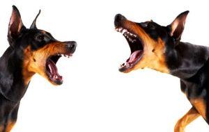 dogs+barking