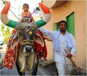 Bull_decorated_in_Hyderabad,_India