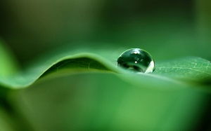 green_dew_drop-wide
