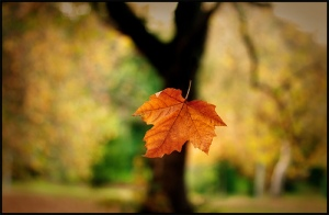 Leaf-and-Tree