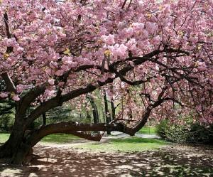 tree - in spring