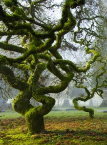 Beautiful-Moss-Covered-Trees