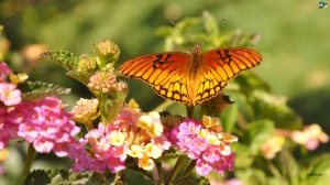 butterfly-30a