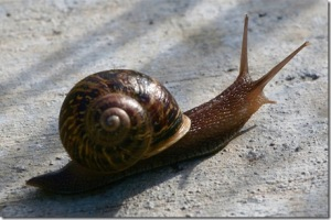 GardenSnail