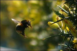 bumble-bee-and-flower