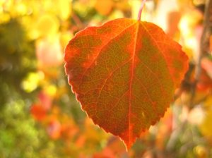 colorful-autumn-leaf