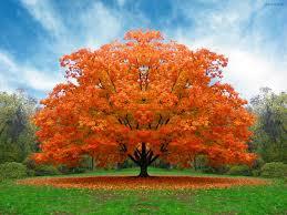 blonde tree