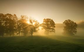 fog and rays