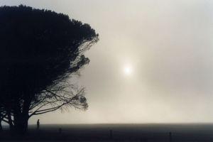 fog_sun_tree