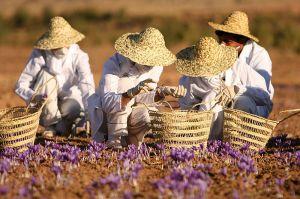 Saffronfarm-05-IMG_7845-2