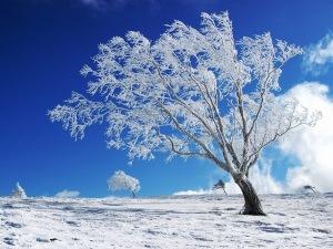 white-tree