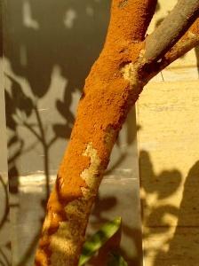 RUST TREE