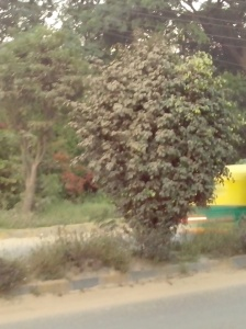 TREE NEAR ROAD