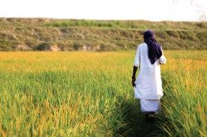 indian_farmar