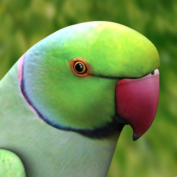 Parrot beak - photo#22