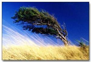 flag-tree