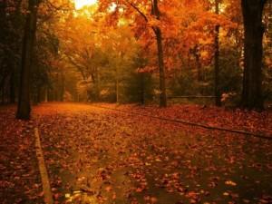 nature-falling leaves -autumn