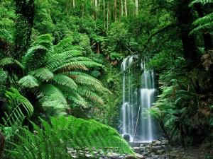 Falls - Waterfalls