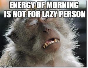 Funny Animal in Morning
