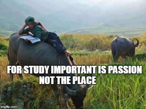 cow boy - boy reading on animal - charawaha
