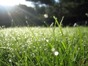 morning-dew-drops