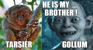 Tarsier animal - Gollum - animal look like Gollum