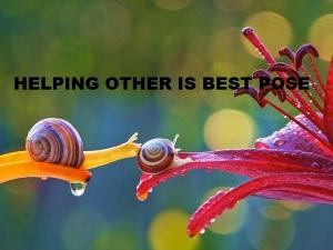 two snail - snail on flower