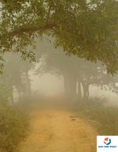 Fog in Bihar - winter fog India