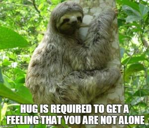 brown-throated-three-toed-sloth - animal hugging tree