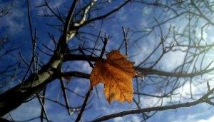 last leaf falling