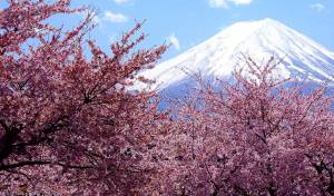 spring-festivals-cherry-blossom-japan-and-holi-in-india-hanami