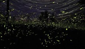 lightning_bugs_star_trails - fireflies