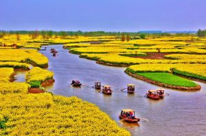 Dongwang Village, Xinghua - rape flower