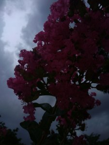Flower under cloud