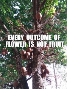 wild things on tree