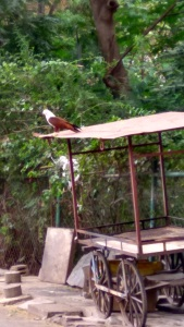 Bird in Bangalore