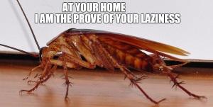 Domestic Sign ofLaziness