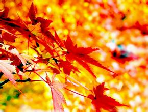 fall-leaves-falling-leaf
