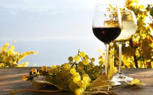 wine-photo