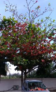 autumn-tree-bangalore