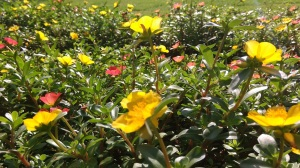 bee-over-flower