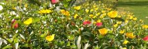 bees-behind-flowers