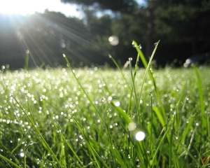 dew-on-grass-in-morning