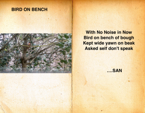 bird-on-branch