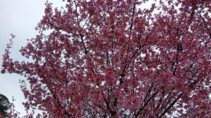 spring petals.jpg